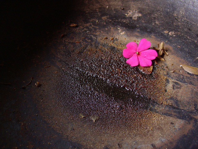 flower-on-a-rusted-bowl-1512990-640x480